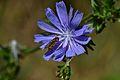Araignées, insectes et fleurs de la forêt de Moulière (Le Gâchet de Villiers) (28510716253).jpg
