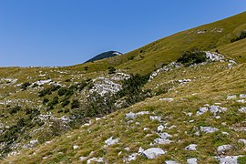 Area under Ćunina glava, Risnjak National Park, Croatia 03.jpg