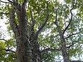 Arimine, Toyama, Toyama Prefecture 930-1458, Japan - panoramio (10).jpg