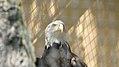 Assiniboine Park Zoo, Winnipeg (480472) (13490148034).jpg
