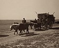 Assyrian refugees on wagon.jpg