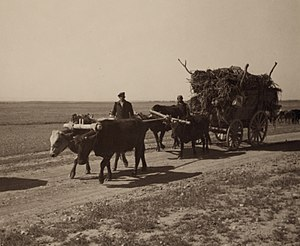 Assyrian people - Assyrian refugees on a wagon moving to a newly constructed village on the Khabur river in Syria.