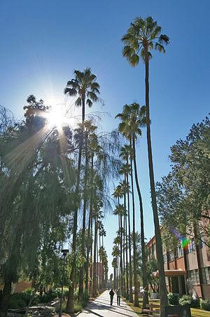 Palm Walk - Palm Walk at Arizona State University.