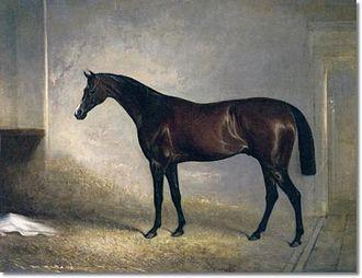 Attila (horse) - Attila, by John Ferneley