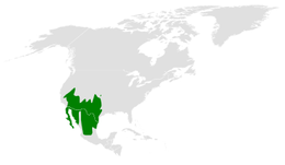 Auriparus flaviceps distribution map.png
