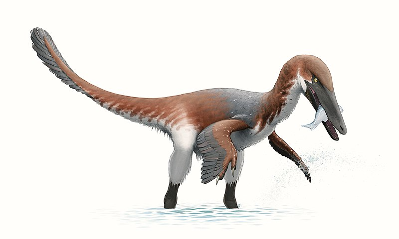 File:Austroraptor Reconstruction.jpg