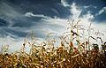 Autumn (5004966847).jpg