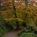 Autumnal colours by the Lagan - geograph.org.uk - 1550789.jpg