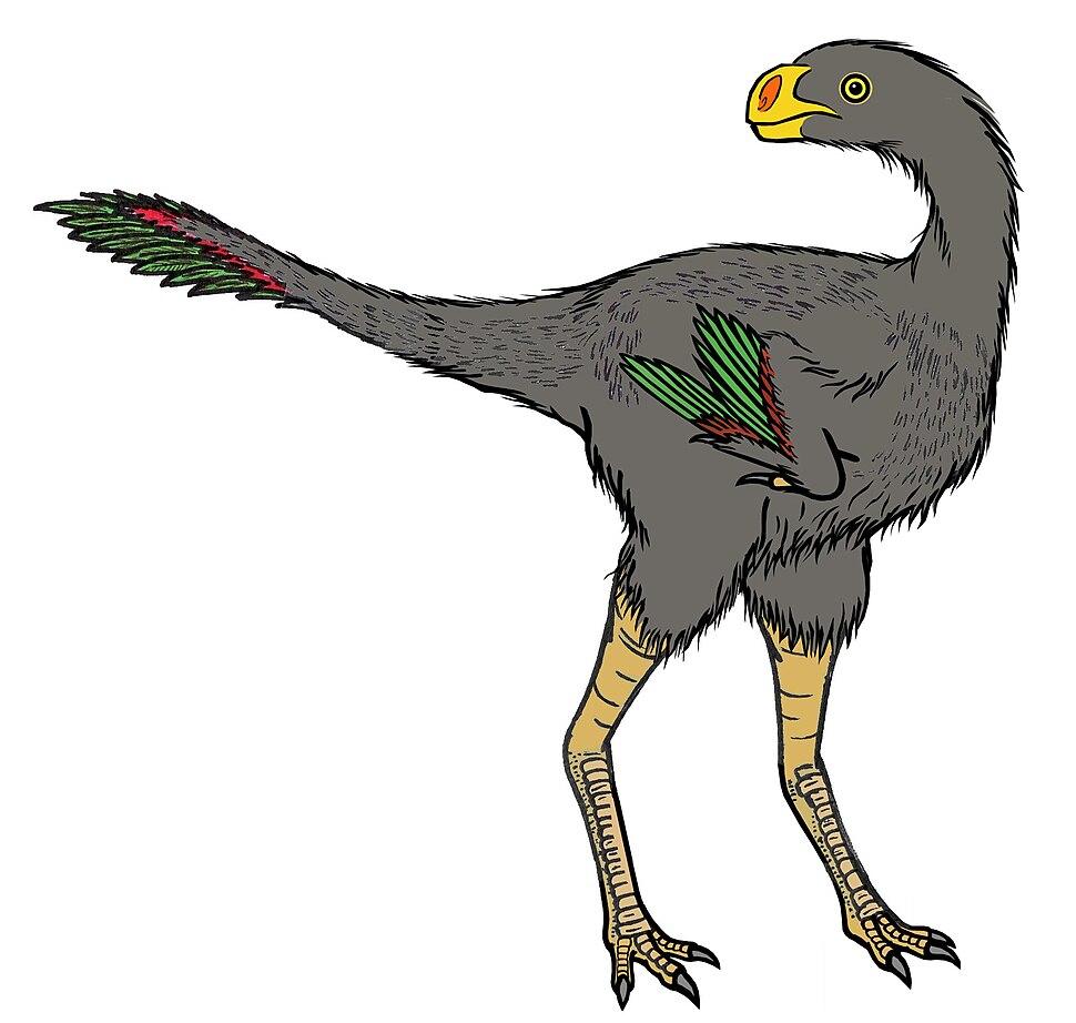 Avimimus ( feathers )