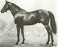 Ayrshire horse.jpg