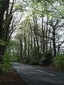 "B3179 passing ""Big Wood"" on the left - geograph.org.uk - 1881448.jpg"