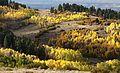 BOULDER MT, UT - 2016-09-30 fall color -01g (31623077886).jpg