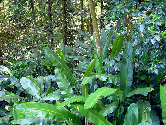 Babonneau, St Lucia, Rainforest