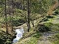 Bach vom Ganssee zum Murkenbach - panoramio.jpg