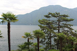 Lombardy - Palms and maritime pines on the shores of Lake Como