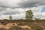 Balloërveld, natuurgebied in Drenthe 10.jpg