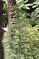 Bambouseraie de Prafrance 20100904 012.jpg