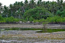 Bancao Beach at Low Tide showing Intertidal Zone from about 200 meters from the beach.jpg