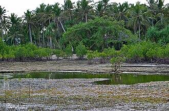 Intertidal zone - Bancao Beach at Low Tide showing Intertidal Zone from about 200 m from the beach