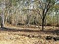 Bandipur Tiger Reserve - panoramio (24).jpg