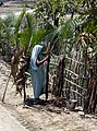 Barguna District 05.jpg