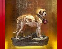 Barry der Rettungshund.jpg