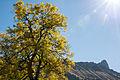 Baum vor Schrattenfluh.jpg