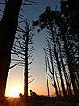 Beach sunset tall trees shadows TWilliams 2015 (22946328226).jpg
