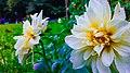 Beautiful flowers in Kandy.jpg