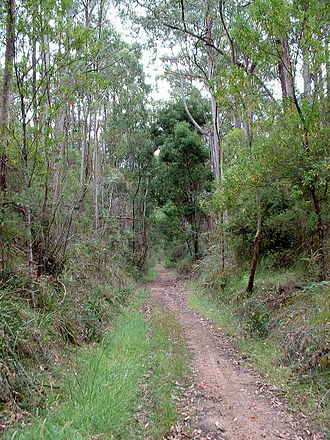 Colac, Victoria - Old railway line from Colac to Beech Forest, now Old Beechy Rail Trail.