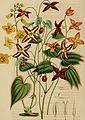 Belgique horticole (20364017405).jpg