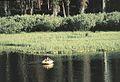 Big Trinity Lake 2.jpg