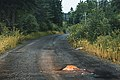 Big rock on dirt road - Road hazard vs truck skid plates (28064244018).jpg