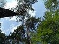 Bila Tserkva, Kyivs'ka oblast, Ukraine - panoramio (103).jpg