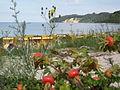 Binz Düne Strand Granitzer Ort.jpg
