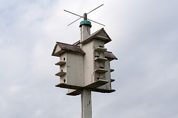 A bird house, taken at the Peabody Mansion Est...