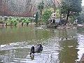 Black swan and statues - geograph.org.uk - 143714.jpg