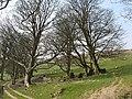 Blaen-heath - geograph.org.uk - 436143.jpg