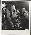 Bloemen, kassen, Seringen, Bestanddeelnr 043-0784.jpg