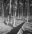 Bosbewerking, arbeiders, boomstammen, gereedschappen, zagen, Bestanddeelnr 251-9994.jpg