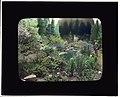 Boston Horticultural Society Exhibition, Horticultural Hall, Massachusetts Avenue, Boston, Massachusetts. LOC 7535952450.jpg