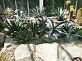 Botanička bašta Jevremovac 066.JPG
