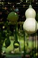Bottle Gourd - Flickr - nekonomania.jpg