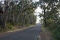 Bowral NSW 2576, Australia - panoramio (142).jpg