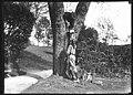 Boy Scouts installing birdhouse, Seattle, ca 1923 (MOHAI 2749).jpg