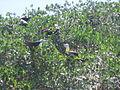 Brütende Vögel.JPG