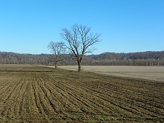 Brazeau Bottom - Image: Brazeau Bottoms, Perry County, Missouri, Bottomland in winter