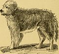 Breeding, training, management, diseases and c. of dogs- (1877) (14596377758).jpg