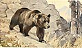 Brehms Tierleben. Allgemeine kunde des Tierreichs (1911) (20405465562).jpg