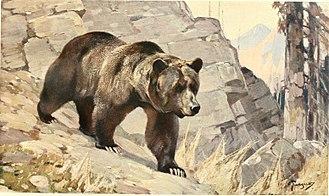 Carl Rungius - Bear, 1911